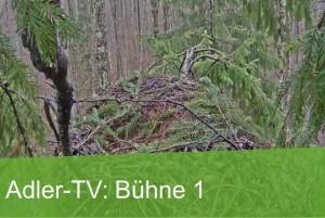 Adler-TV Greifvogel Schreiadler