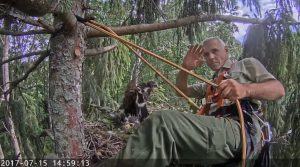 Schreiadler Webcam Lettland
